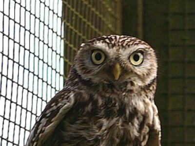 Vogelpark Niendorf Käuze